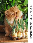 Funny Cat With Green Onion