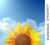 Single Sunflower With A Sky As...