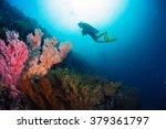 Divers Exploring The Bright...