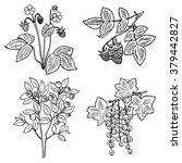 hand drawn set of wild berries  ...   Shutterstock .eps vector #379442827