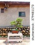 a small bonsai tree under sun... | Shutterstock . vector #379481173