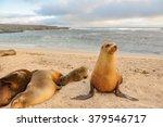 a sea lion family  san...   Shutterstock . vector #379546717