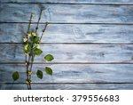 Little Green Flower At Wooden...