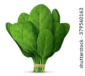 bunch of fresh spinach close up.... | Shutterstock .eps vector #379560163