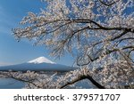 mt.fuji with cherry blossom at... | Shutterstock . vector #379571707