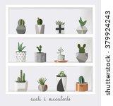 succulent plants growing in... | Shutterstock .eps vector #379924243