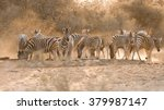 group of adult and young plains ... | Shutterstock . vector #379987147