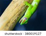 green gecko from madagascar  ... | Shutterstock . vector #380019127