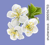 cherry blossoms. white flowers. ... | Shutterstock .eps vector #380056753