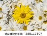 flower background   Shutterstock . vector #380113507
