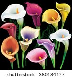 calla flowers set in different... | Shutterstock .eps vector #380184127