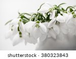 Beautiful Snowdrops In A...
