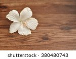 A Single White Hibiscus Flower...