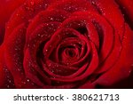 Red Rose Flower Detail With...