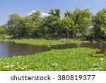 Water Lilies  Grass  Trees And...