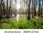 Cypress Swamp In Northern...