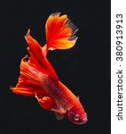 Red Betta Fish  Siamese...