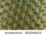 Texture Of Cactus