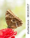 butterfly | Shutterstock . vector #381131017