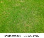 Grass Texture. Grass Backgroun...