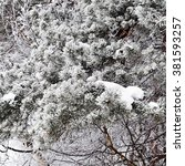 Pine Tree In The Snow  Fir Tre...