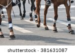 Small photo of Horse of Calcutta Police are going to participate in republic day acrimony.