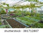 Growing Vegetables On Rooftop ...