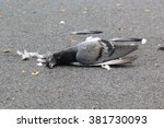 Dead Pigeon On Street