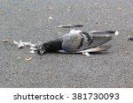 Dead Pigeon On Street