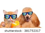 Stock photo cat and dog wearing sunglasses relaxing in the sea background isolated on white 381752317