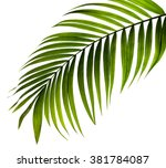 Green Leaf Of Palm Tree On...