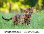 bengal cat | Shutterstock . vector #381907603
