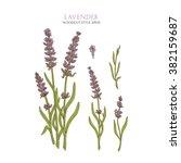 vector botanical illustration... | Shutterstock .eps vector #382159687