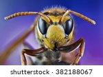 bee  honey  macro  wild  bite ... | Shutterstock . vector #382188067