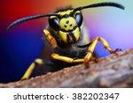 Bee  Nature  Eyes  Hornet  Fly...