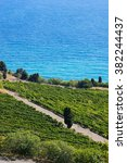 the vineyards and the sea....