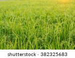 Small photo of rice paddy field plant natural food countryside abound thailand