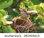 Baby Bird Sittiing On Edge Of...
