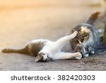 Two Playful Cats On Warm Sprin...