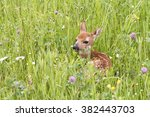Fawn Resting In A Bed Of...