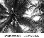coconut palm tree silhouette   Shutterstock . vector #382498537