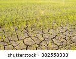 rice sprouts on cracked soil | Shutterstock . vector #382558333