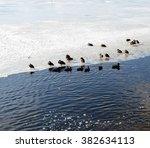 ducks on ice shelf | Shutterstock . vector #382634113