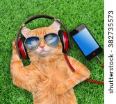 Cat Headphones  Wearing...