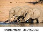 three african elephants... | Shutterstock . vector #382952053
