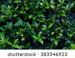 green leaf background | Shutterstock . vector #383546923