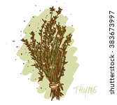 thyme herb   Shutterstock .eps vector #383673997