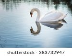 The Swan On A Pond