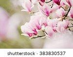 magnolia tree | Shutterstock . vector #383830537