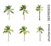 coconut trees on white... | Shutterstock . vector #383985853